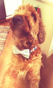 boods in a bowtie
